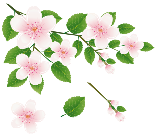 Spring_Tree_Branch_with_Flowers_PNG_Clipart_Picture